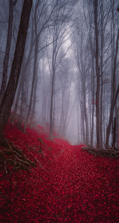 foggy misty autumn forest  iphone wallpapers