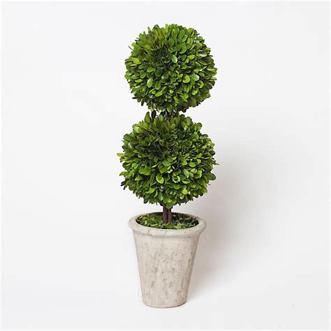 Simple Decoration Of Bedroom Boxwood Topiary Ball Offers The Joy Of Minimalism And