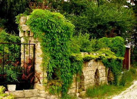 green climbing plants 20 green fence designs plants to beautify garden design