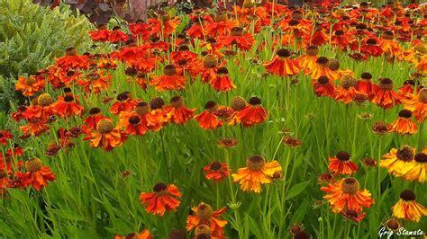 fall garden ideas the best plants for your autumn garden youtube