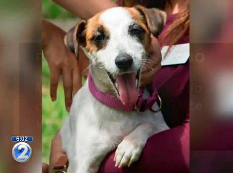 craigslist dog houses for sale craigslist dog for sale ad sparks outrage the dogington post