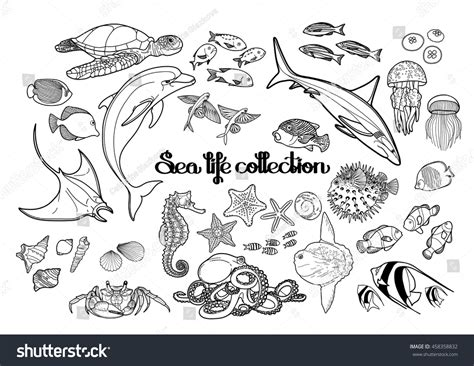 ocean background coloring page graphic sea life collection vector ocean stock vector