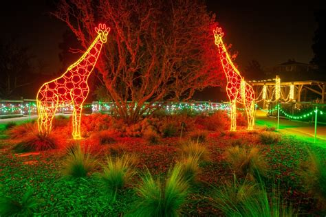 Zoo Christmas Lights Sanjonmotel Lights Zoo
