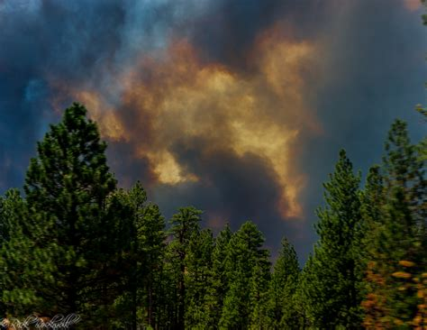 Prevention Of Forest Essay by State Wildfires Forest Archives Calexplornia