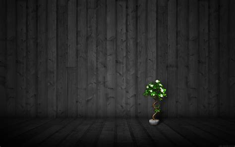 houseplant for dark room lonely plant in dark room black wallpaper hd download