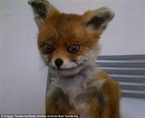 Stoned Fox Meme - what did they ever do to you the badly stuffed animals