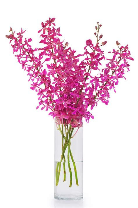 Orchids In A Vase by Purple Orchid In Vase By Atiketta Sangasaeng