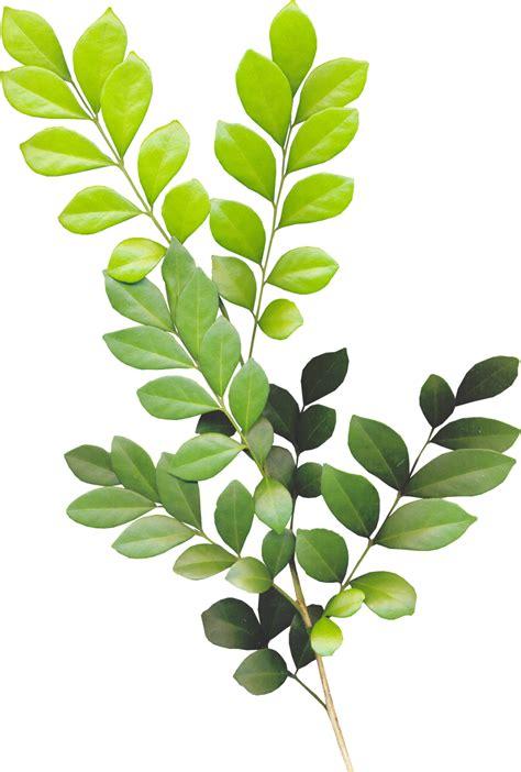 green leaves png image veerendra vijaya pinterest всё обо всём листья png для дизайна