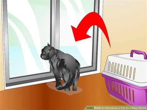 how to introduce cats a new home cats kittens