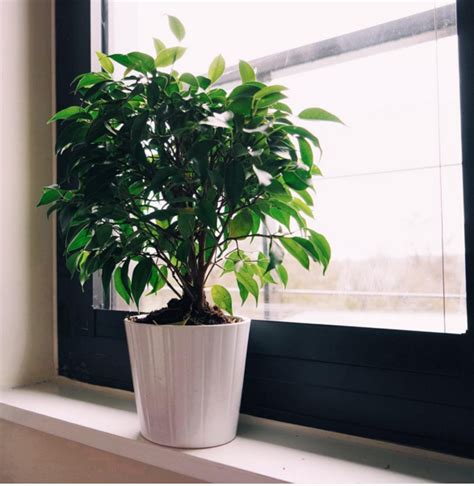 15 beautiful house plants that can actually purify your beautyglife 187 15 beautiful house plants that can actually