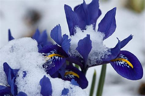 flowers that bloom only in winter what to grow in winter 37 plants for winter gardening