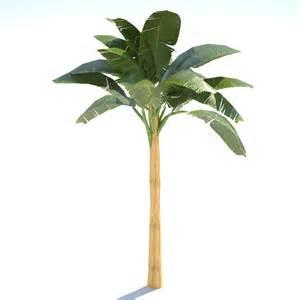 3d model banana tree 02 low poly vr ar low poly obj