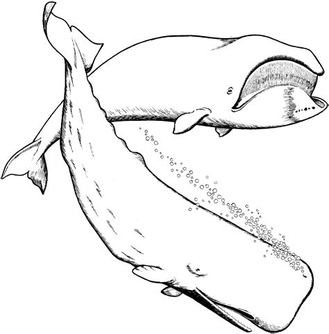 coloring pages whales free coloring pages of shark