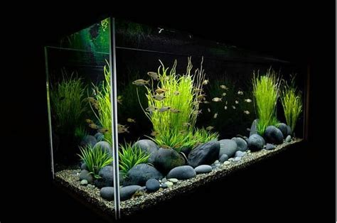 aquarium design x planted freshwater aquarium setup aquarium design group