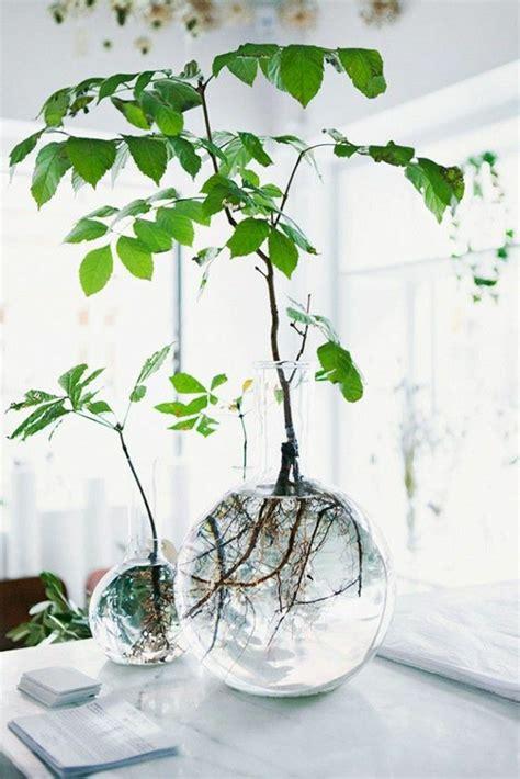 Tolle Zimmerpflanzen by Savourez La Beaut 233 De La Plante D Int 233 Rieur Dans Notre
