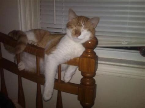 8 Places Cats Like To Sleep by The 37 Funniest Photos Of Cats Sleeping In The Most