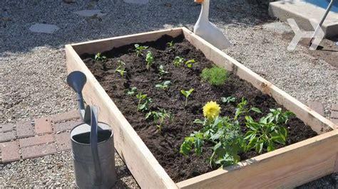 plant  vegetable garden youtube