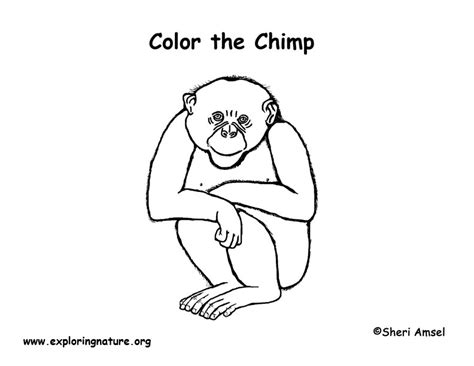 exploring nature coloring pages chimpanzee coloring page exploring nature educational