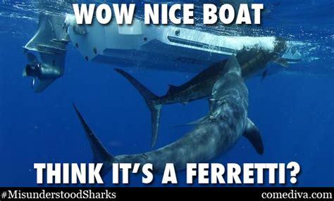 Shark Meme - shark meme