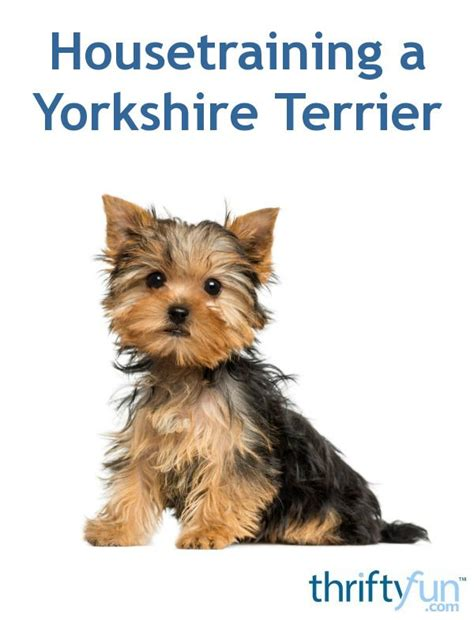 best way to house a yorkie puppy 482 best pets images on
