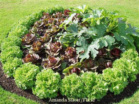 Ornamental Vegetable Garden An Ornamental Vegetable Garden Plot Garden Goodness
