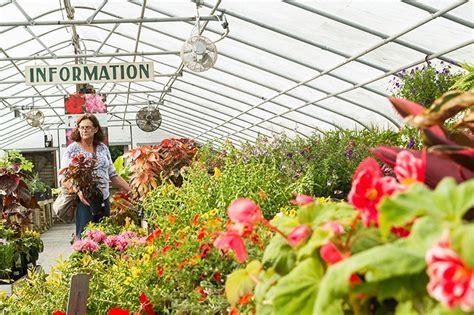 Vineyard Gardens by Garden Talk Cool Weather Annuals The Martha S Vineyard