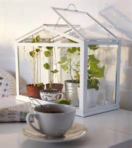 socker greenhouse indoor green house photo