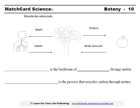 Carbon Cycle Worksheet Answers by Botany Science Projects