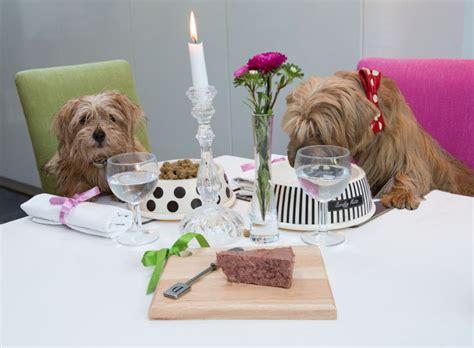 dogs dinner hosting a dogs dinner petspyjamas