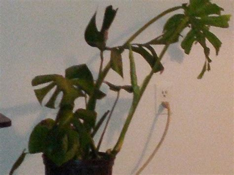 flowering house plants identification 100 climbing house plants 25 easy houseplants easy