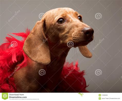 puppy rate puppy rate royalty free stock images image 11095559