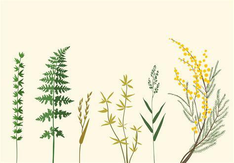 Botanic Botanical Botanic Illustrations Free Vector Stock