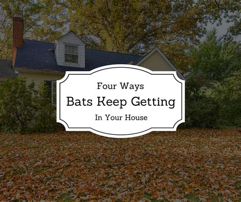 4 ways bats keep getting in your house