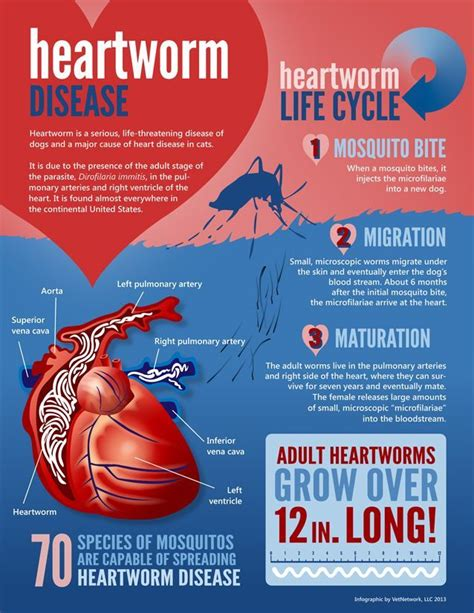 heartworm medicine 80 best images about heartworms on facts cats and high risk