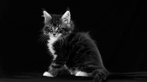 cat ke wallpaper 2560x1440 cat wallpaper wqhd 1440p wide quad hd 16 9