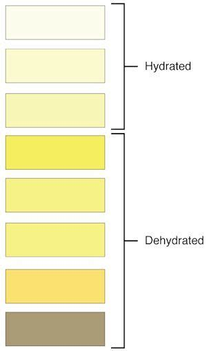 Pale Stools Urine by Urine Colors Chart Meaning Of Color And Smell