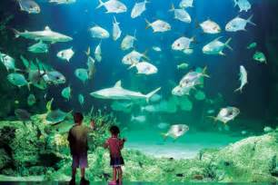The Aquarium World Visits Sydney Aquarium One Of The Greatest