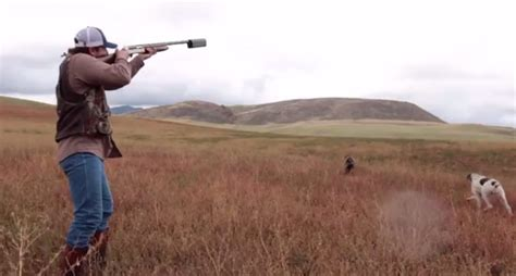 how to a to pheasant hunt pheasant with a salvo12 suppressor from silencerco