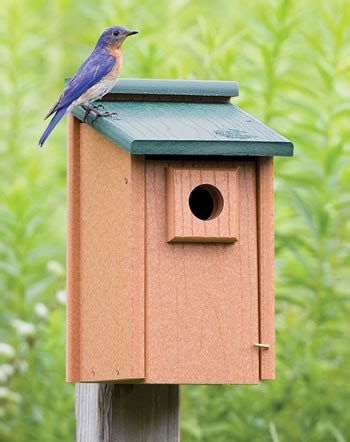 three bluebird houses and more planned for our five acres