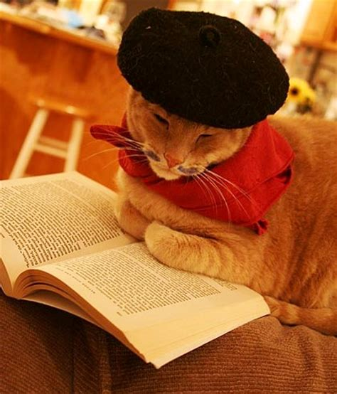leer libro e un gato y un perro fotos de gatos leyendo estandarte