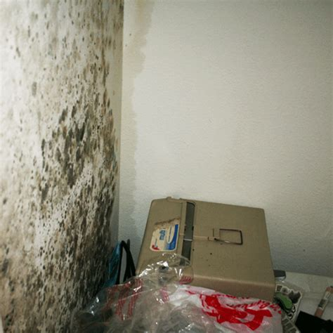 how to get rid of mold on the bathroom ceiling how to get rid of mold structural how to get rid of stuff