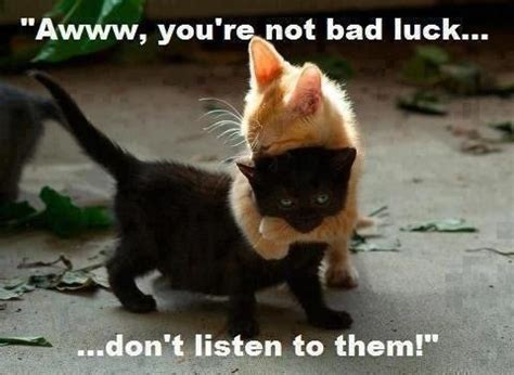 Funny Black Cat Memes - aww cute black cat meme funny cute pinterest