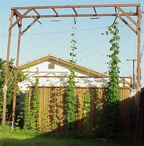 backyard hops how to grow hops a hop growing journal and how to guide