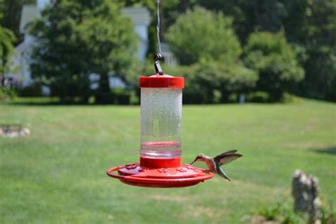 hummingbird feeders where to buy when to hang