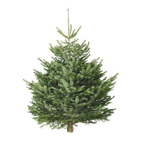buy 163 25 ikea xmas tree and get 163 20 voucher now live