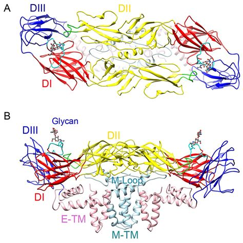 e protein zika the 3 8 197 resolution cryo em structure of zika virus science