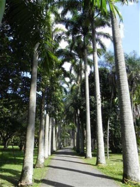 imagenes de jardines en venezuela jard 237 n bot 225 nico caracas lo que se debe saber antes de