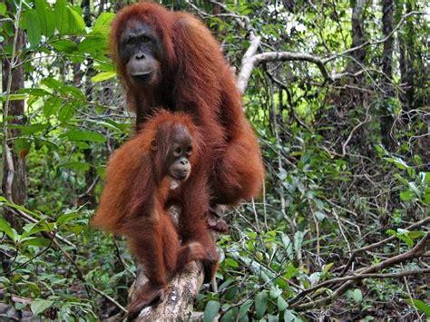 Kartu Telepon Indonesia Wwf World Wildlife Fund the places you ll go c leakey posts wwf