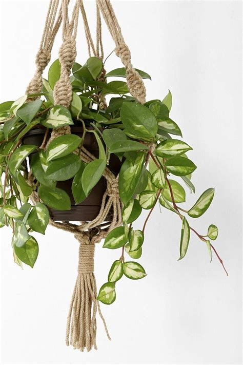 hanging plant magical thinking hand knotted hanging plant holder