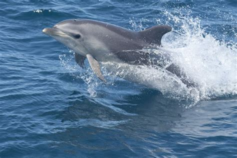google images dolphins dolphin google search marine and animals pinterest